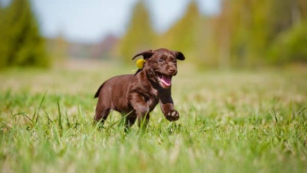 Is a Bark Collar a Good Idea?: Tips for Dealing with Frequent Barking