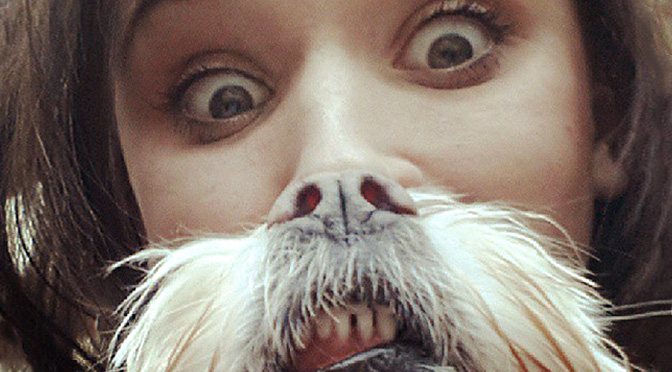 Are You A Crazy Dog Person Quiz The Dog People By