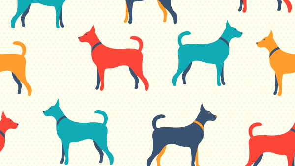The American Kennel Club & Rover com Join Forces On AKC