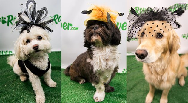 These Adorable Dogs are Ready for the Derby in High-Fashion Hats