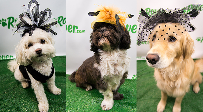 three dogs in fashion hats