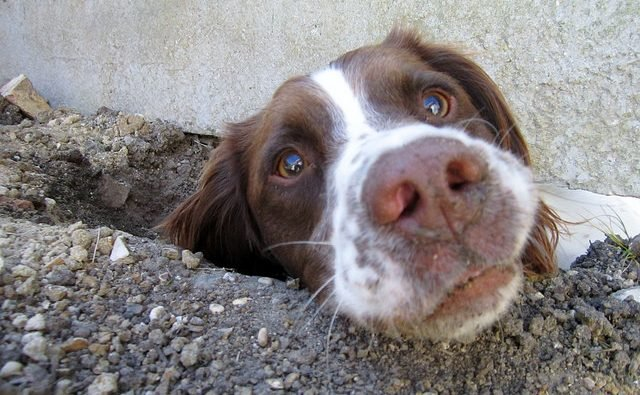 Dog Digging Up Your Yard Here Are 7 Tips To Stop Them