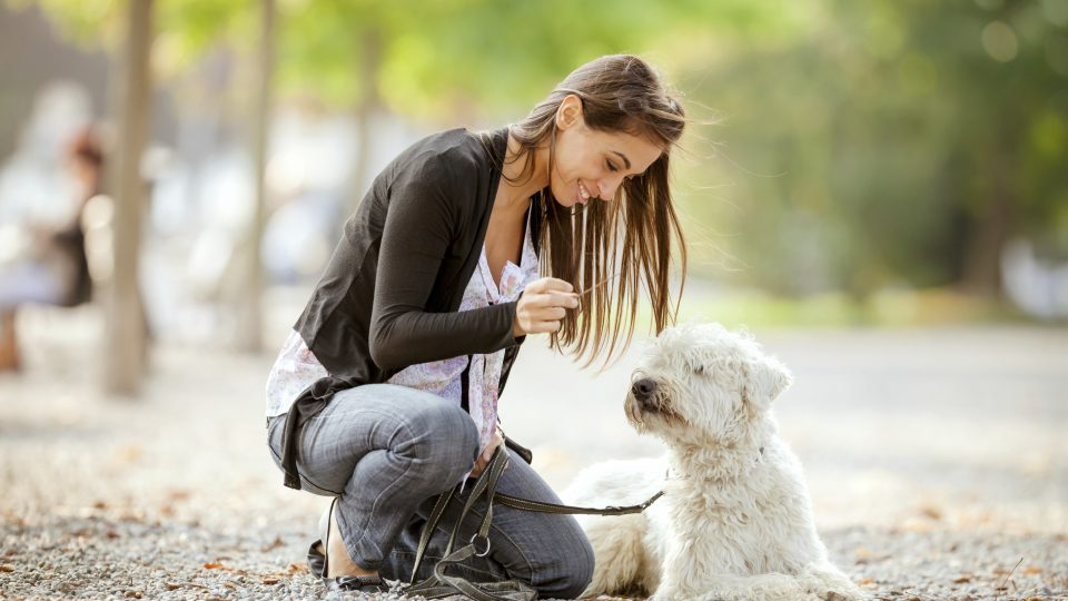 Getting The Best Dog Sitter The Only Way You Ll Truly