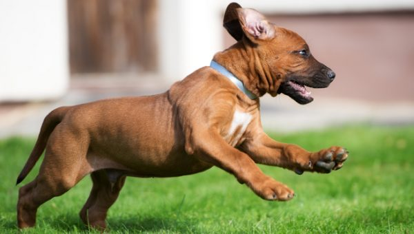 Does Your Dog FRAP? Hint: It's Also Known as the Zoomies.