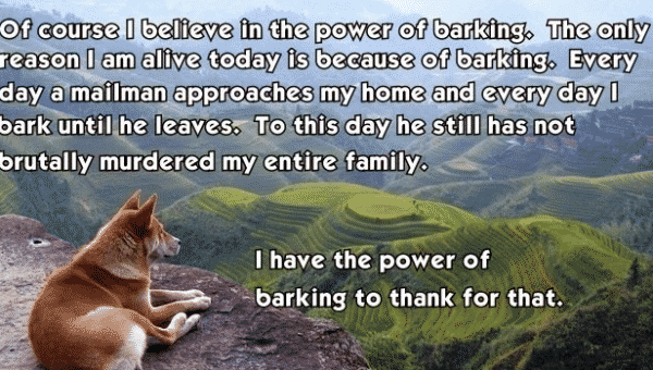 4 Surefire Ways to Stop Your Dog from Barking So Much