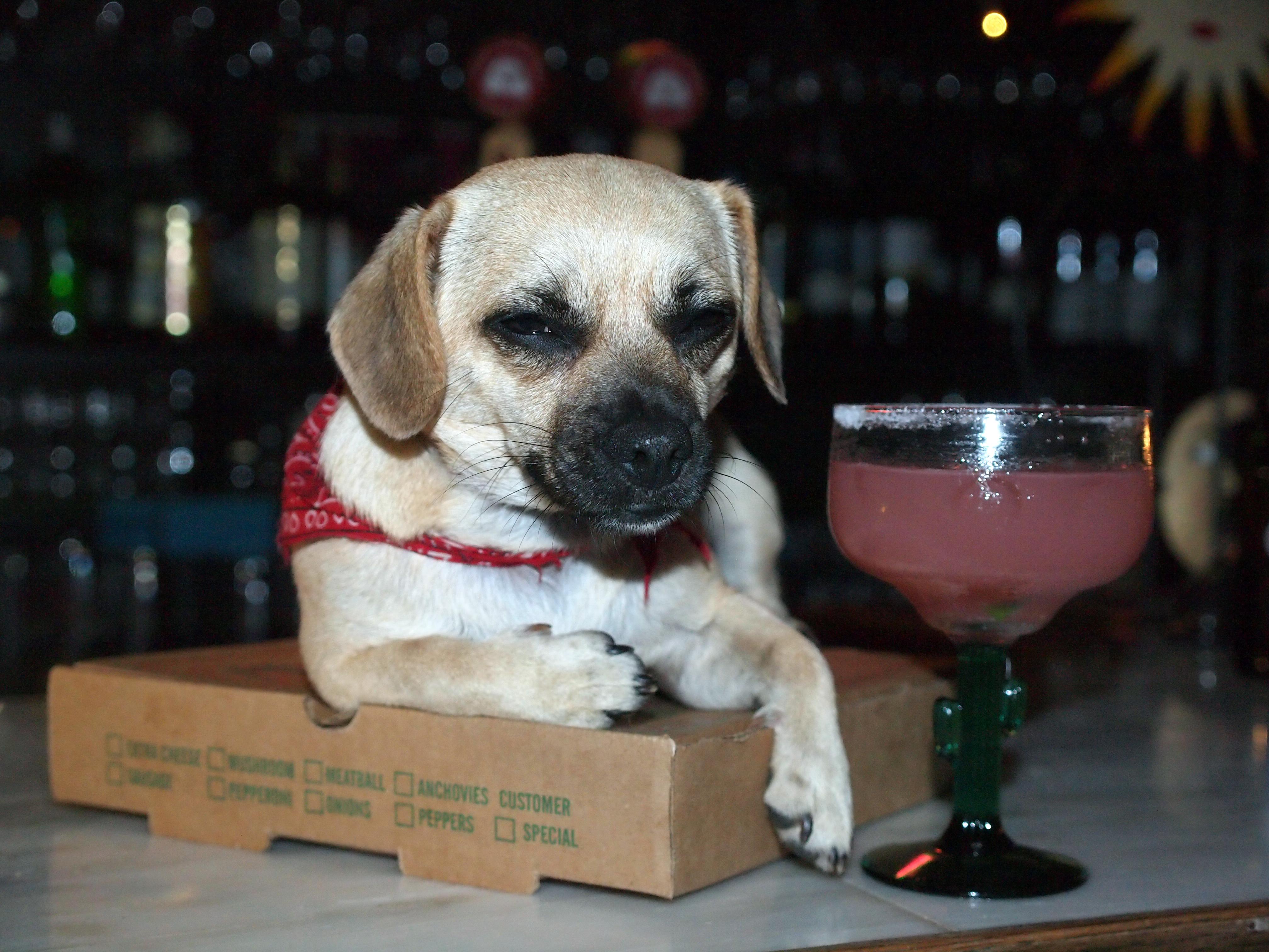 9 Tasty Cocktails Named After Dogs Rover Com