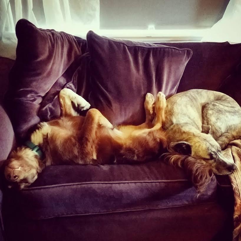 Dogs with epilepsy 2