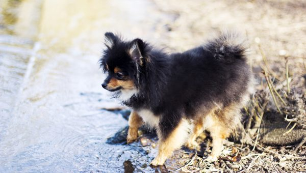 11 Dog Breeds That Don't Like the Water