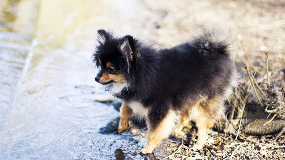 11 Dog Breeds That Don\u0027t Like the Water