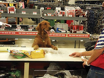 A dog at a counter at dog-friendly store Tractor Supply