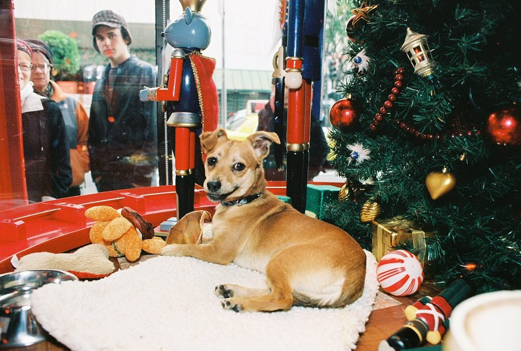 dog in macys window