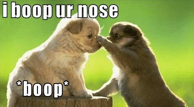 7 Adorable Puppy Boops To Make You Say Aww And 1 Real Life Fox