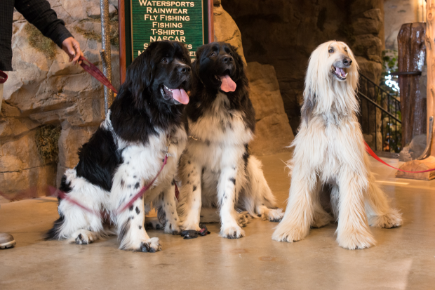 dogs at bass pro