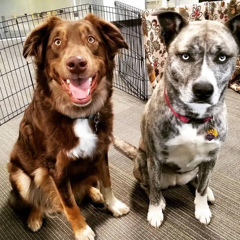 dogs epilepsy 3
