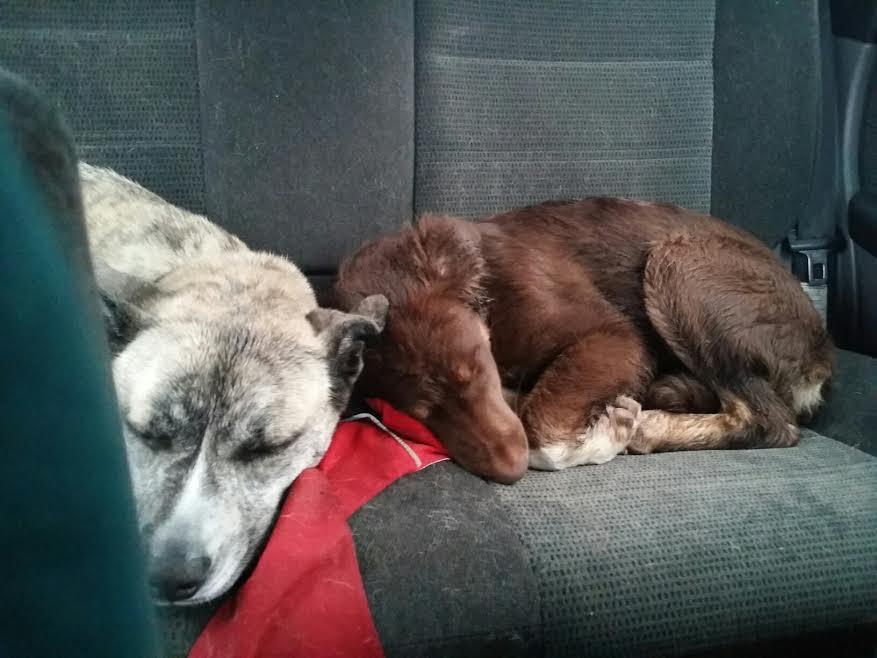 dogs epilepsy 5