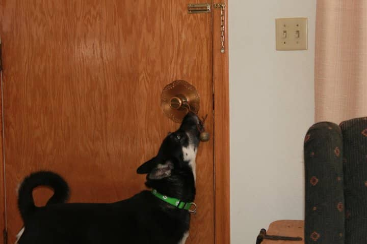 Bell Training For Dogs It Really Works Heres How The Dog