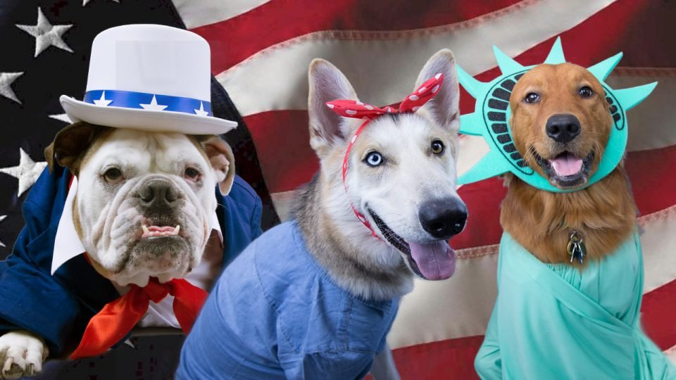 dogs dressed as statue of liberty, uncle sam, and rosie the riveter