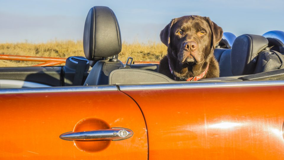 Our 6 Favorite Road Trips to Take with Dogs | The Dog People by