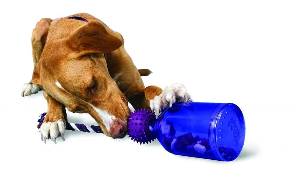The 9 Best Puzzle Toys That Actually Help Bored Dogs | The