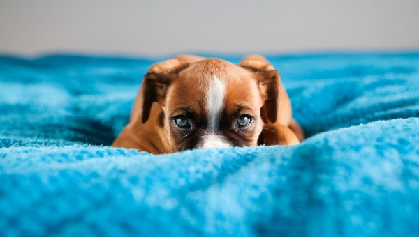 Why Is My Dog Afraid of Men? The Answer Might Not Be What You Think