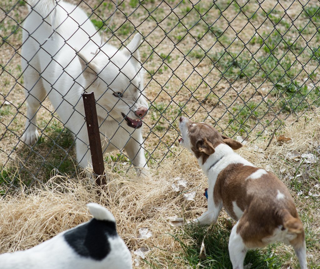 how to stop the fence wars 4 tips for dogs barking at each other