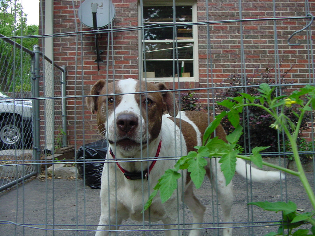 How To Stop The Fence Wars 4 Tips For Dogs Barking At