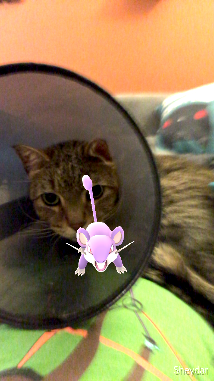 Cat catches Ratata #pokemongo