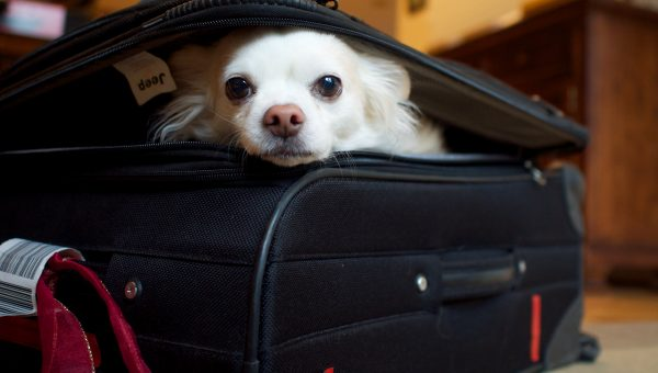 10 Summer Travel Accessories for Dogs—From Crazy Cheap to Crazy Chic