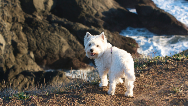 Top 5 Dog-Friendly Hikes Near San Francisco
