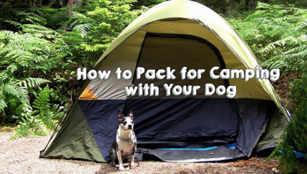 How to Pack for Camping With Your Dog