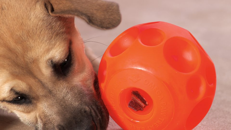 slow eating dog bowl toy