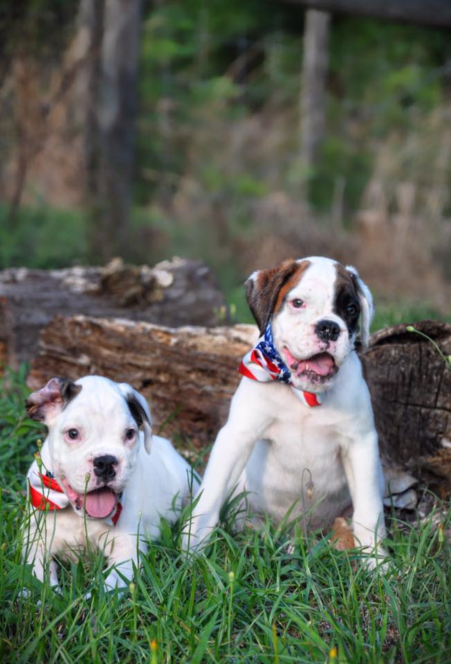 boxers in bow ties