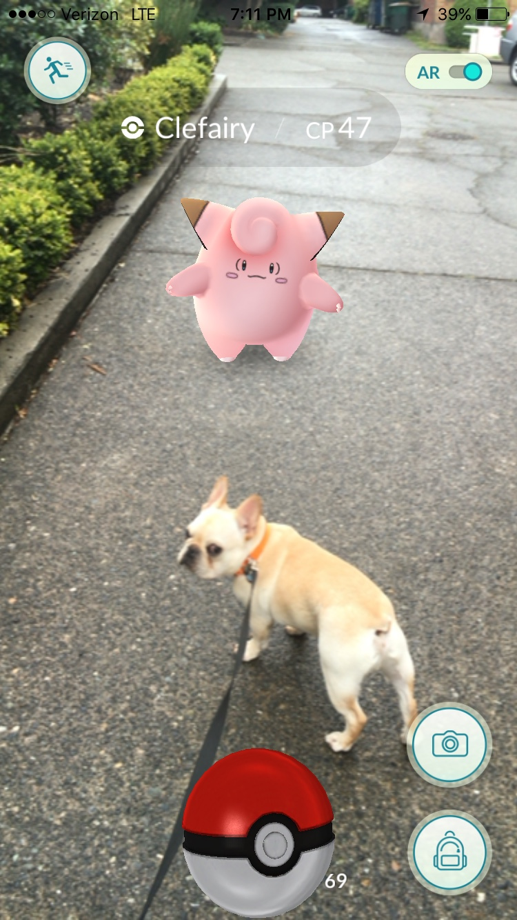 clefairy caught on dog walk french bulldod pokemon go