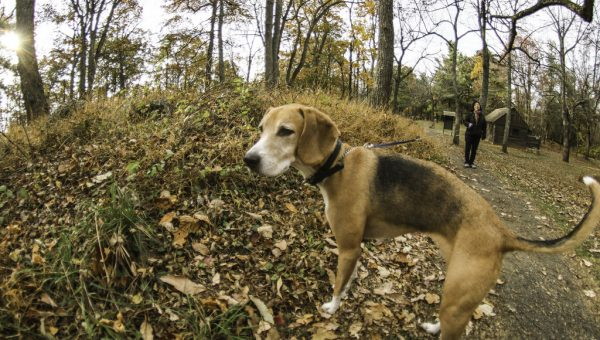 7 Top Dog-Friendly Hikes near Washington DC