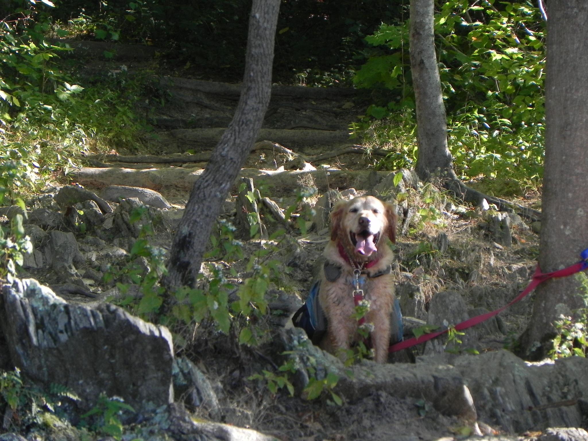 Dog Friendly Hikes Maryland