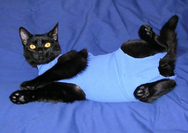 Onesies For Pet Cats