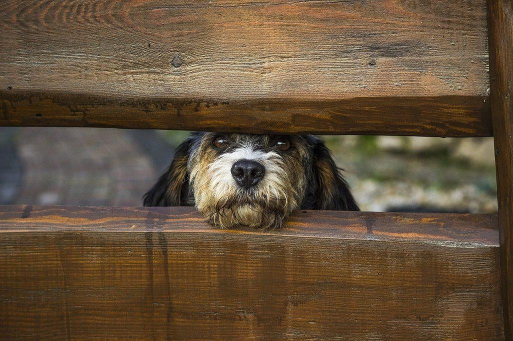 dog-behind-fence