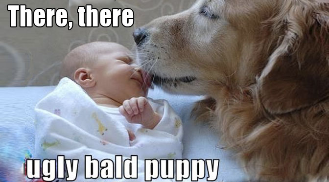 dog nannies babysitters