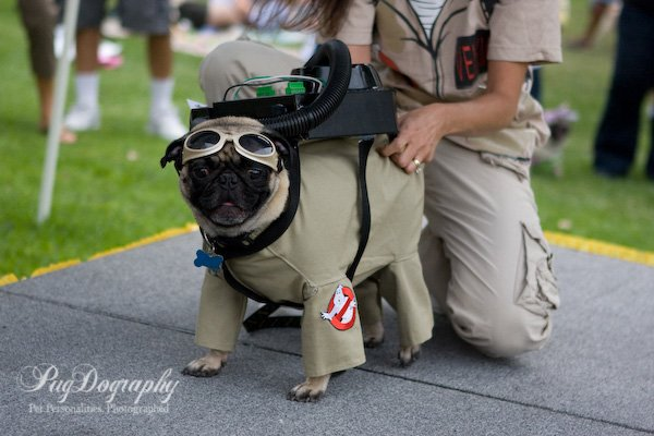ghostbuster dog pugdography