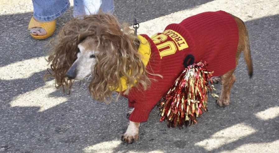 Adoptable Dog Events