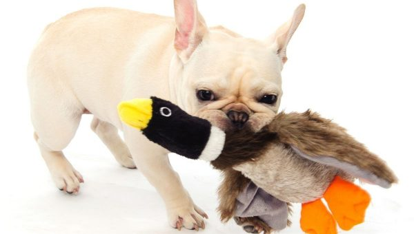 10 of the Best Dog Toys Under $12