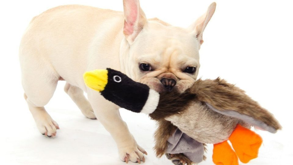 best cheap dog toy mallard duck