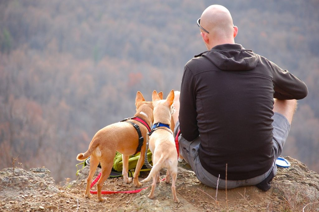 traveling-with-dogs