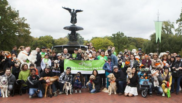 9 of the Best Dog Events in NYC