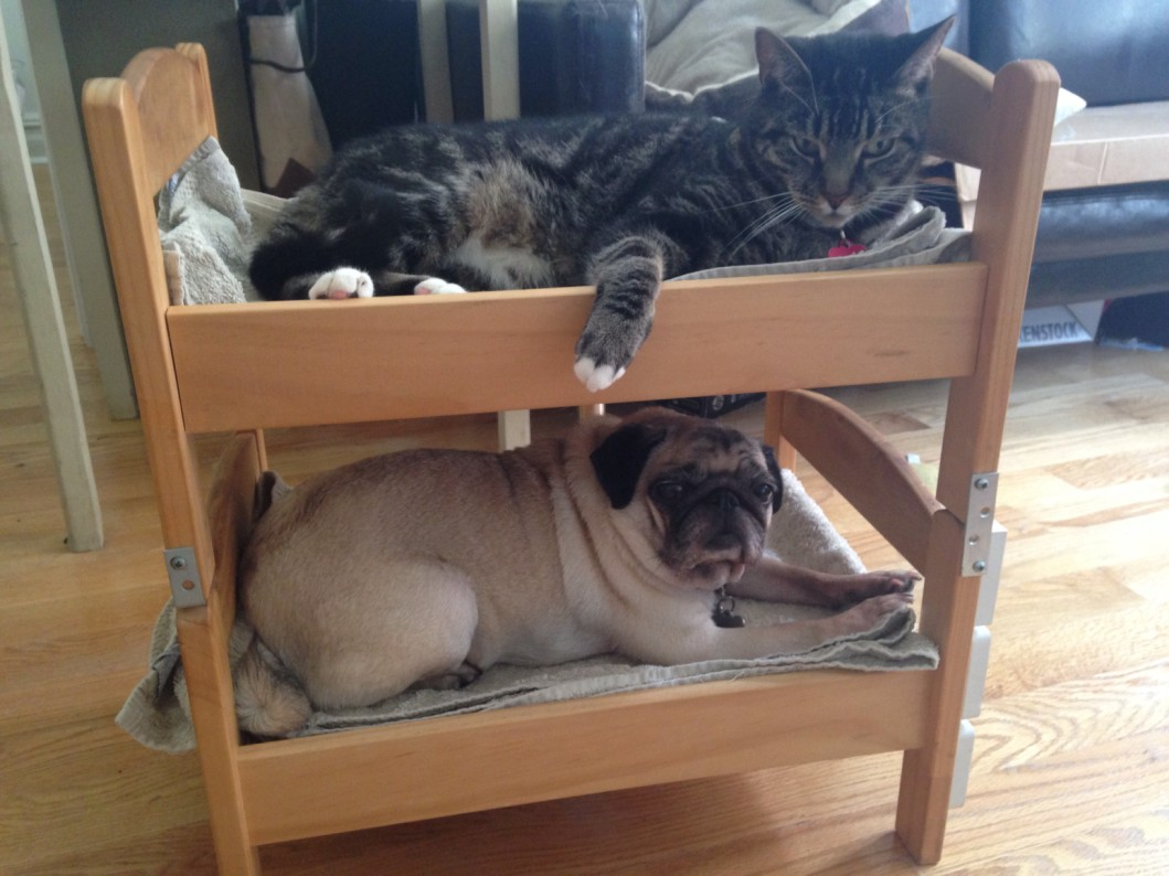 pug dog cat bunk bed ikea hack
