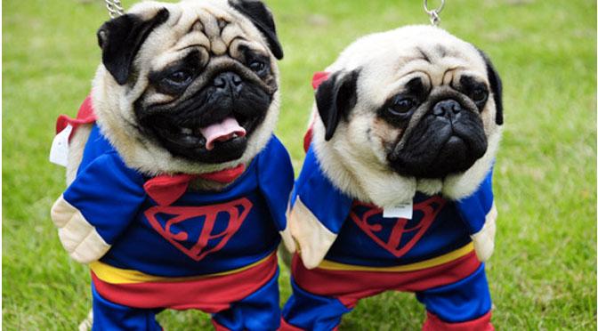 pug superheroes