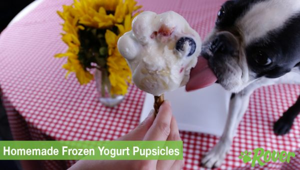 DIY Frozen Yogurt Pupsicles [Dog Cooking Video]