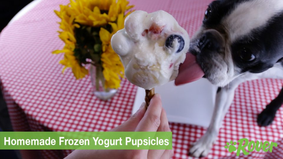 frozen yogurt treats for dogs