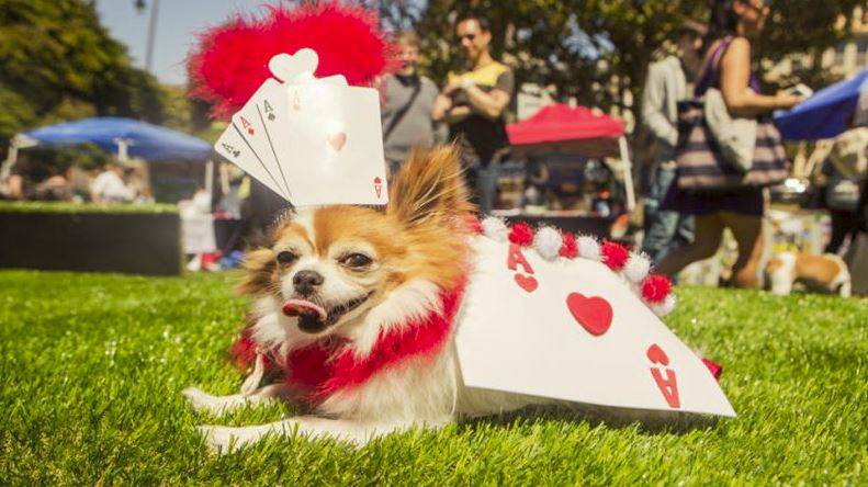 dog events in san francisco spca costume contest