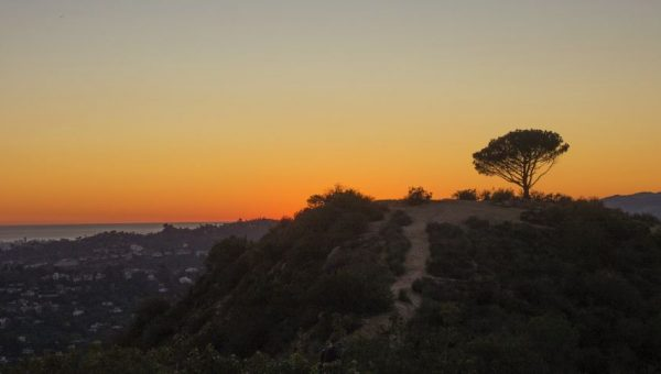 8 Top Dog-Friendly Hikes in Los Angeles